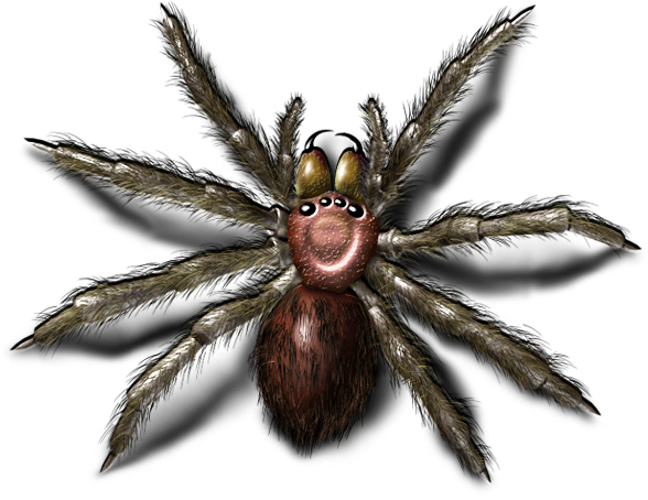 Bugs Png Image - Bugs, Transparent background PNG HD thumbnail