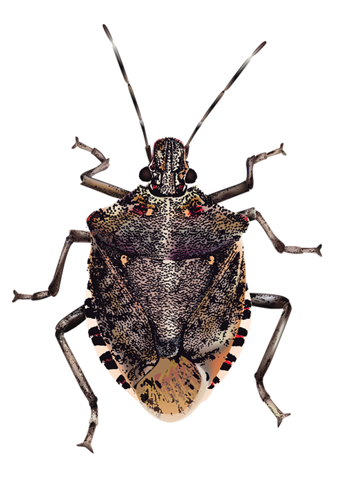 Bugs Transparent Background - Bugs, Transparent background PNG HD thumbnail