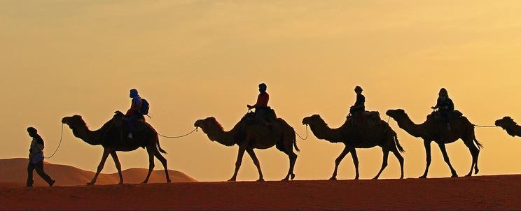 Camels In The Desert Png - Camels Trekking Desert Morocco, Transparent background PNG HD thumbnail