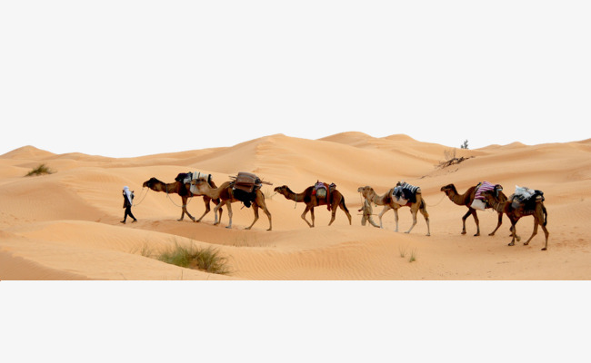 Camels In The Desert Png - Desert Camel, Desert, Dust, Camel Png Image And Clipart, Transparent background PNG HD thumbnail