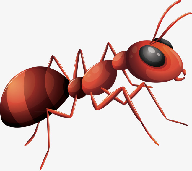 Cartoon Ant Png - Ants Vector, Ant, Decorative Ant, Material Png And Vector, Transparent background PNG HD thumbnail