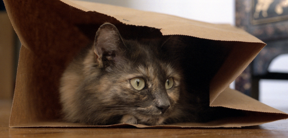Cat In The Bag - Cat In A Bag, Transparent background PNG HD thumbnail