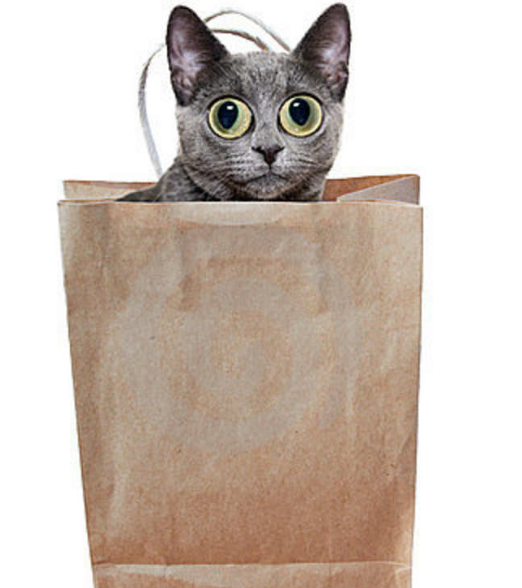 Cat Out Of Bag - Cat In A Bag, Transparent background PNG HD thumbnail