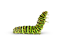 Caterpillar   Chenille Png By Cendredelune Hdpng.com  - Caterpillar, Transparent background PNG HD thumbnail