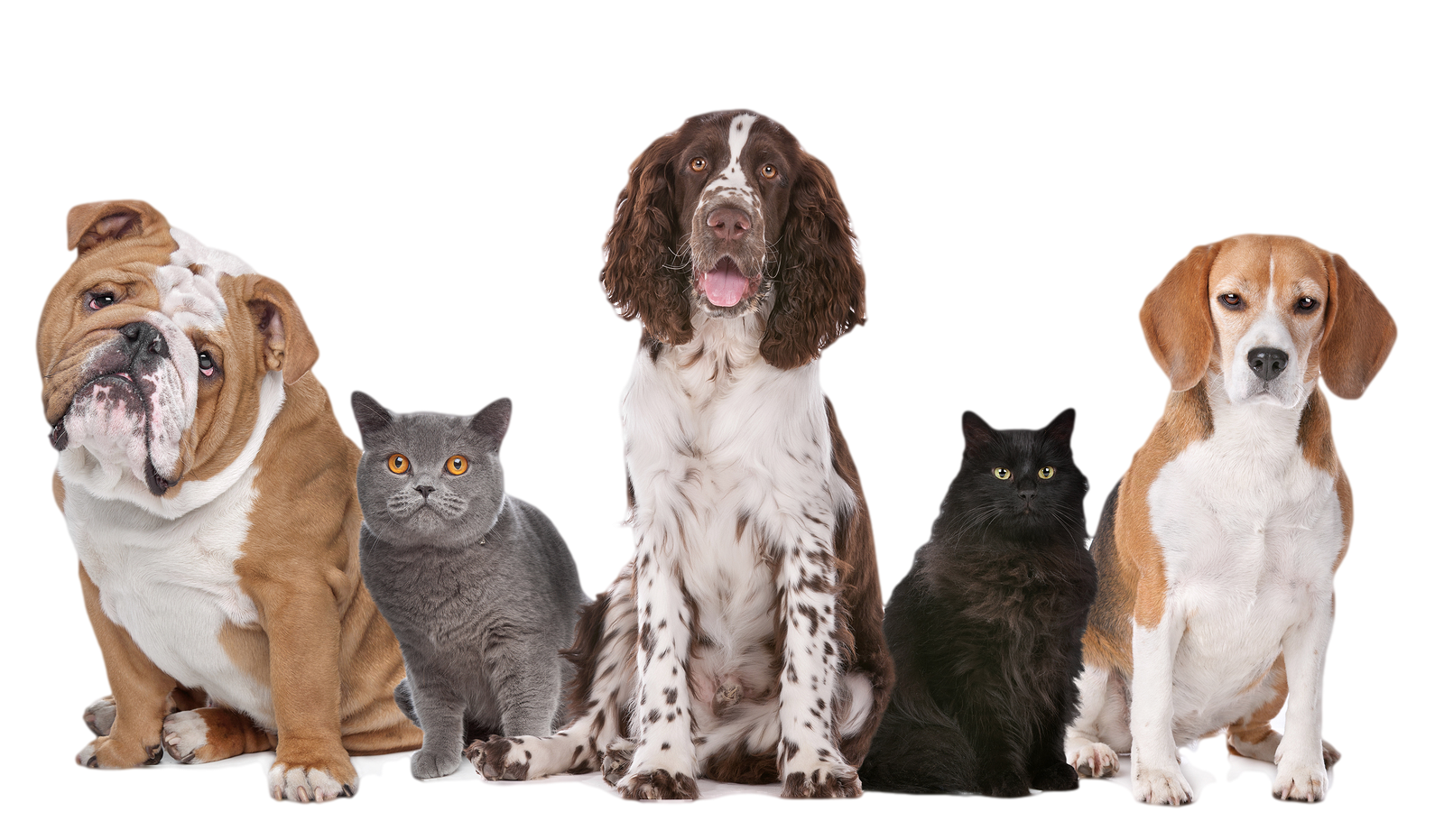 Cats And Dogs PNG HD