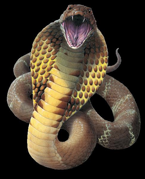 Cobra Snake Png File - Snake, Transparent background PNG HD thumbnail