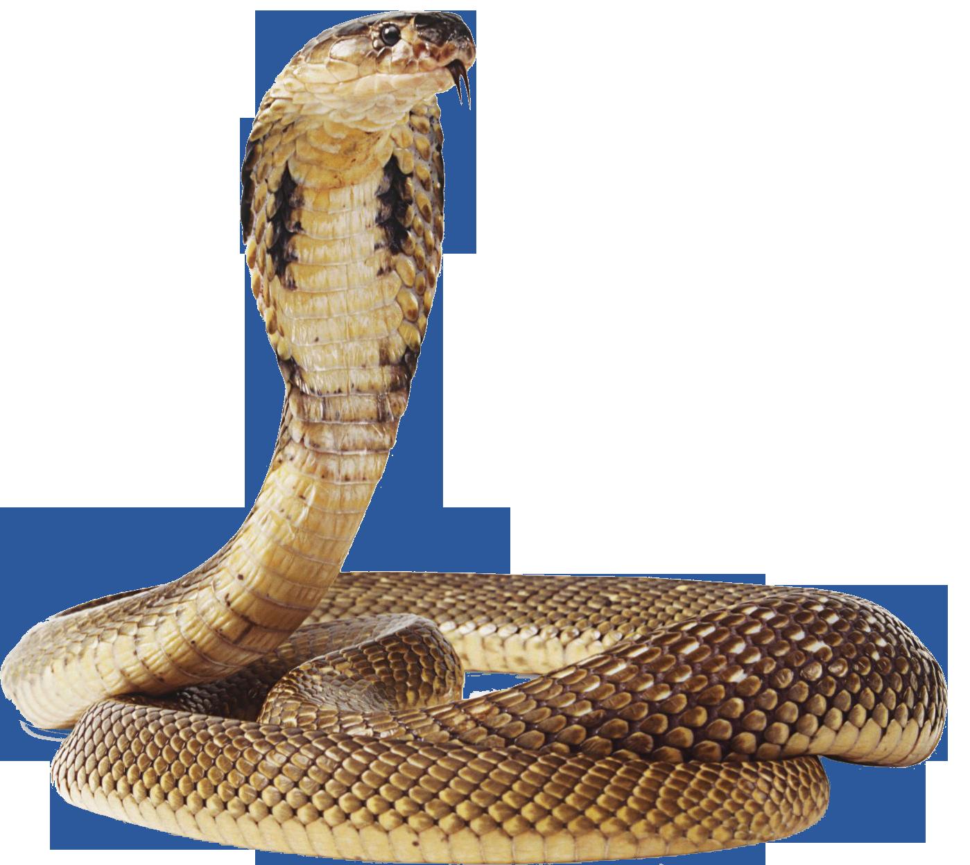 Cobra Snake Png Transparent Image - Snake, Transparent background PNG HD thumbnail