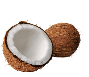 Coconut Png Clipart Png Image - Coconut, Transparent background PNG HD thumbnail