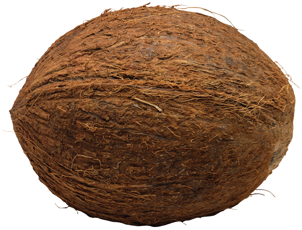 Coconut Png File Png Image - Coconut, Transparent background PNG HD thumbnail