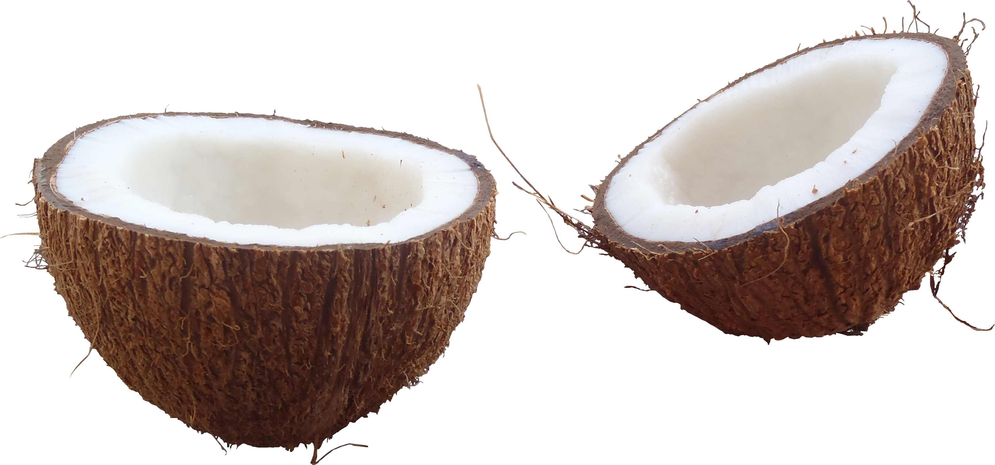 Coconut Png Hd Png Image - Coconut, Transparent background PNG HD thumbnail