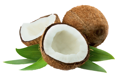Coconut Png Image - Coconut, Transparent background PNG HD thumbnail