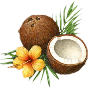 Coconut Png Picture Png Image - Coconut, Transparent background PNG HD thumbnail
