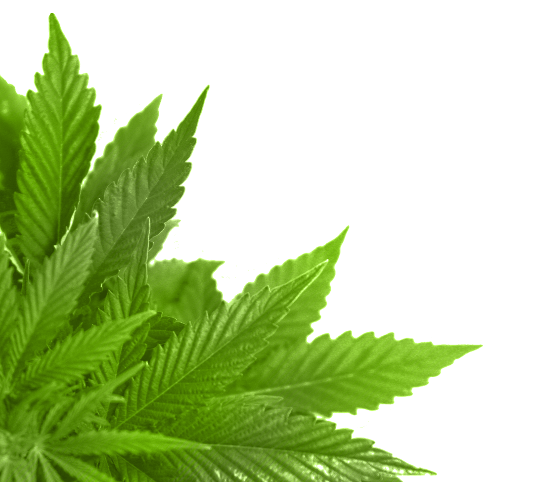 Corner Green Leaf - Leaves, Transparent background PNG HD thumbnail