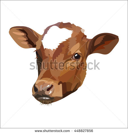 Cow Head Vector - Cow Head, Transparent background PNG HD thumbnail