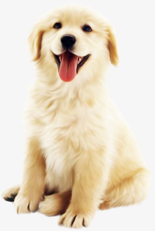 Cute Dog PNG HD