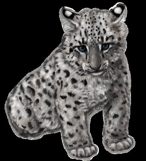 Cute Snow Leopard By Silvercrossfox D6Fsw1B.png - Cute Leopard, Transparent background PNG HD thumbnail