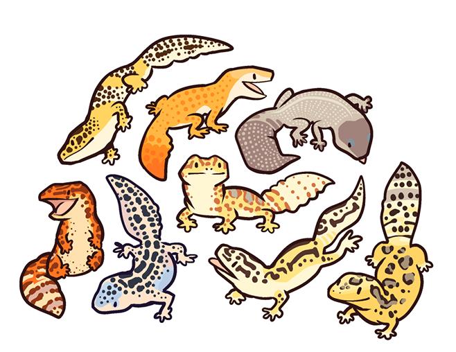 Leopard Geckos Tumblr Adorable - Cute Leopard, Transparent background PNG HD thumbnail