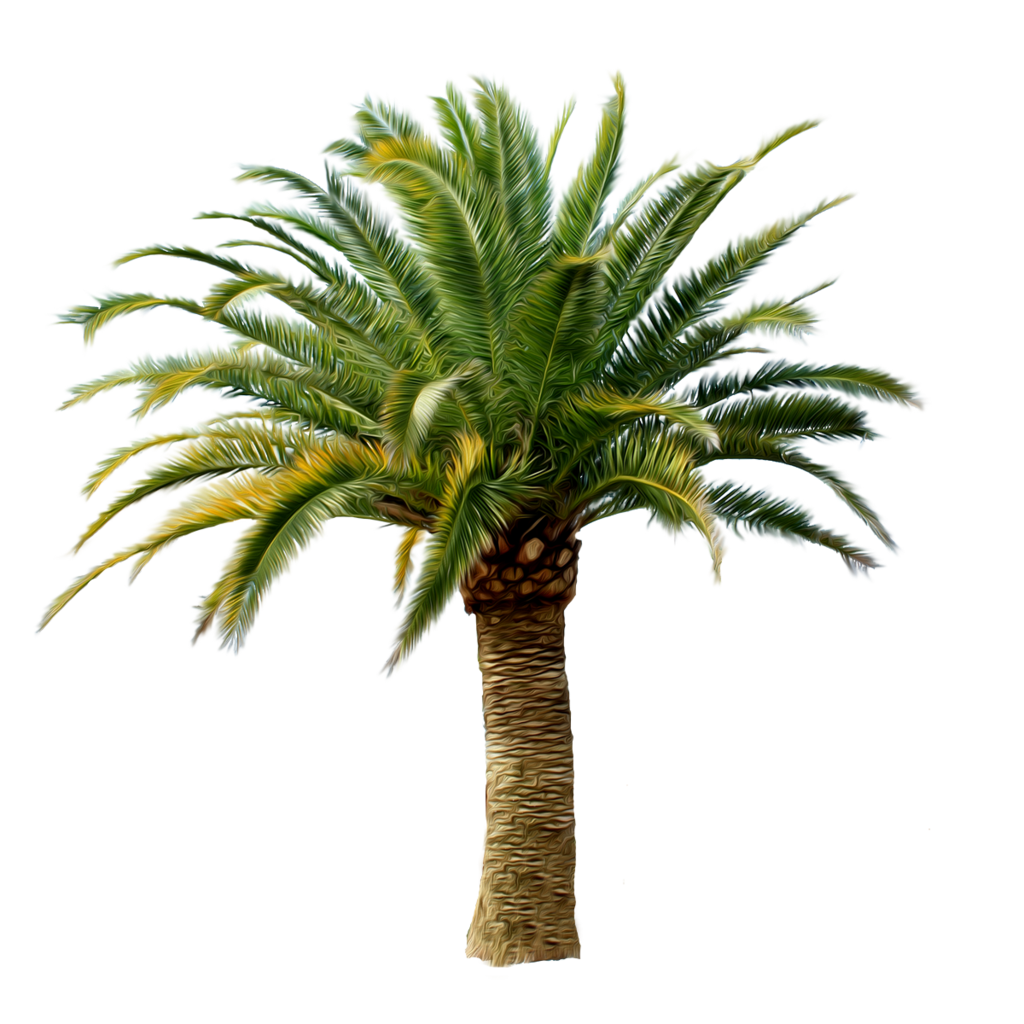 Date Palm Png - Explore Palm Trees, Palms, And More!, Transparent background PNG HD thumbnail
