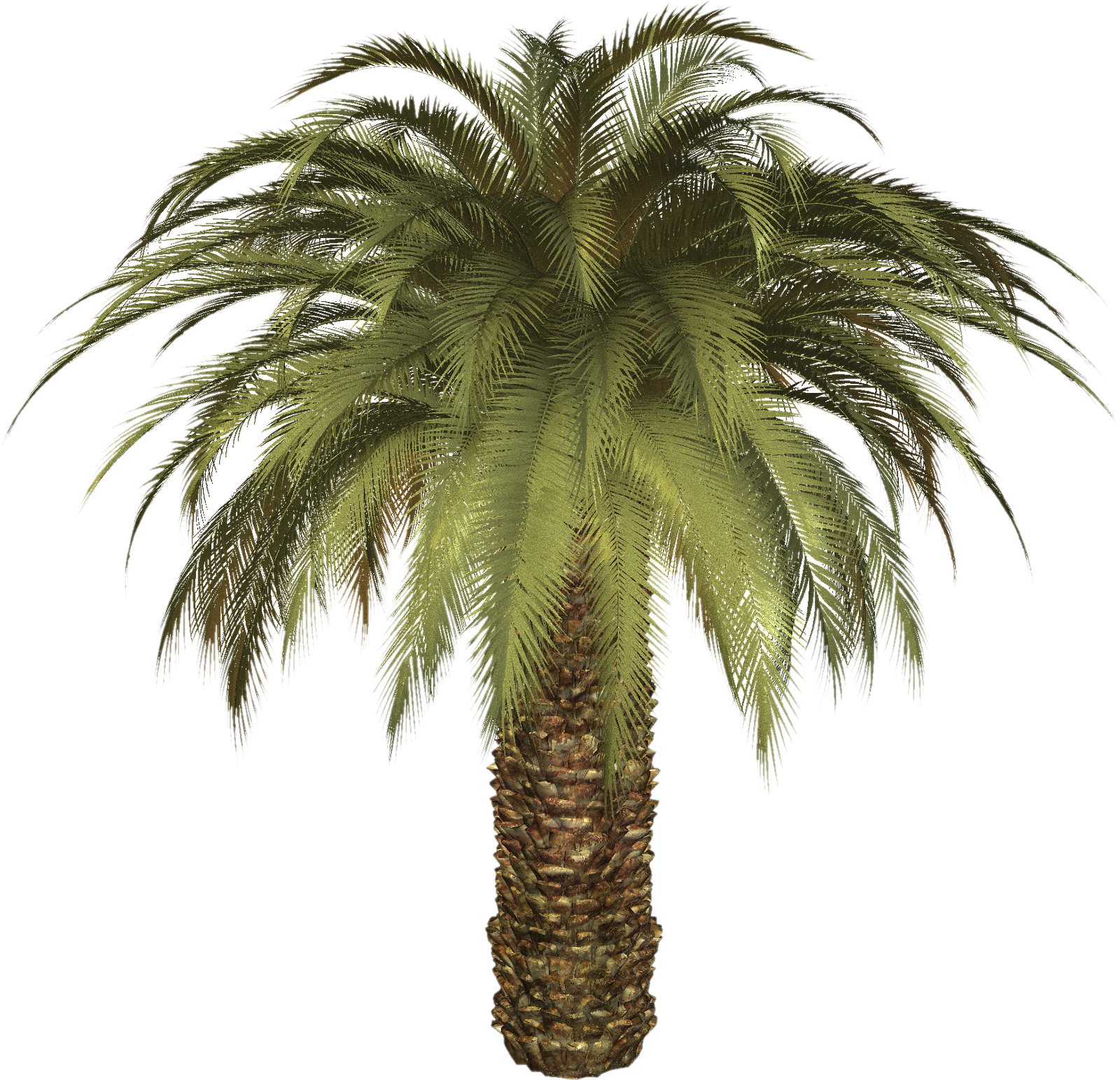 Date Palm Png - Palm Tree Png, Transparent background PNG HD thumbnail