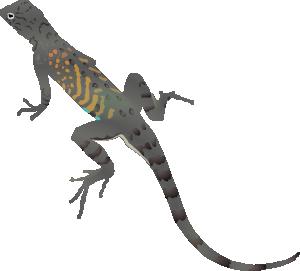 Pin Lizard Clipart Desert Lizard #3 - Desert Lizard, Transparent background PNG HD thumbnail