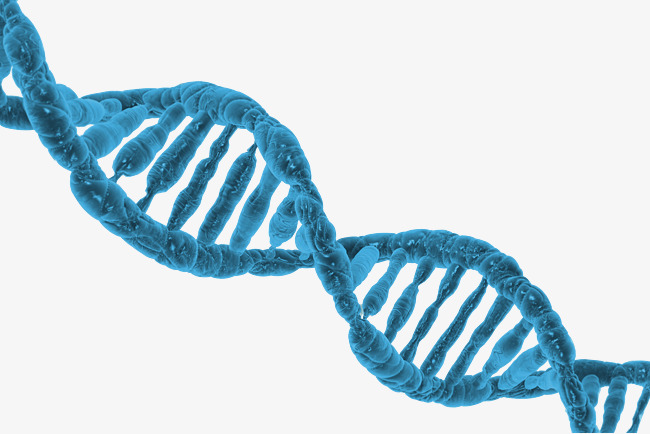 Dna PNG HD
