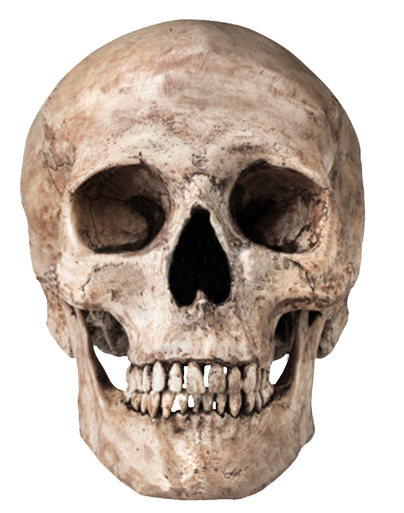 Download Skull Png Images Transparent Gallery. Advertisement - Skeleton Head, Transparent background PNG HD thumbnail