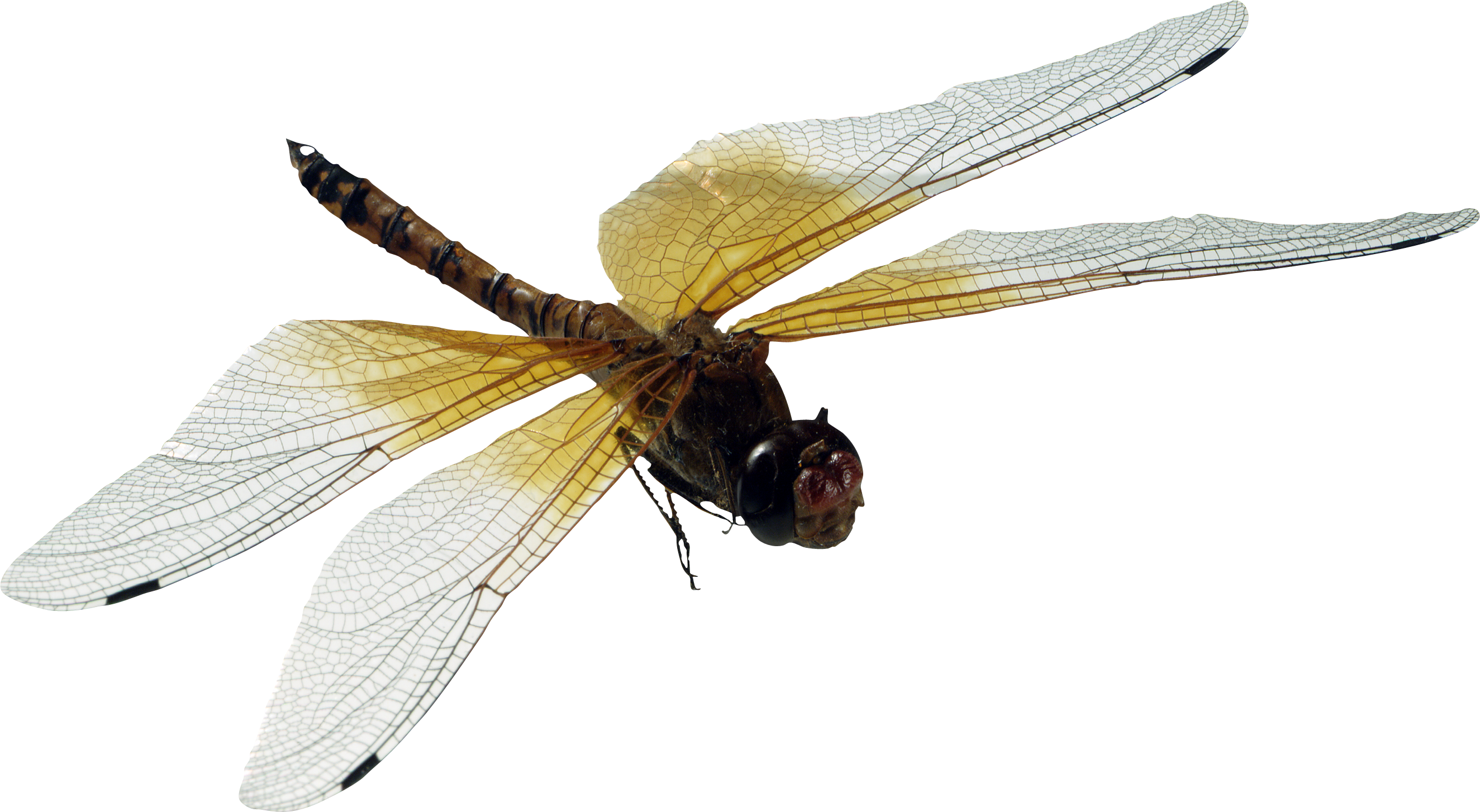 Dragonfly Png - Dragonfly, Transparent background PNG HD thumbnail