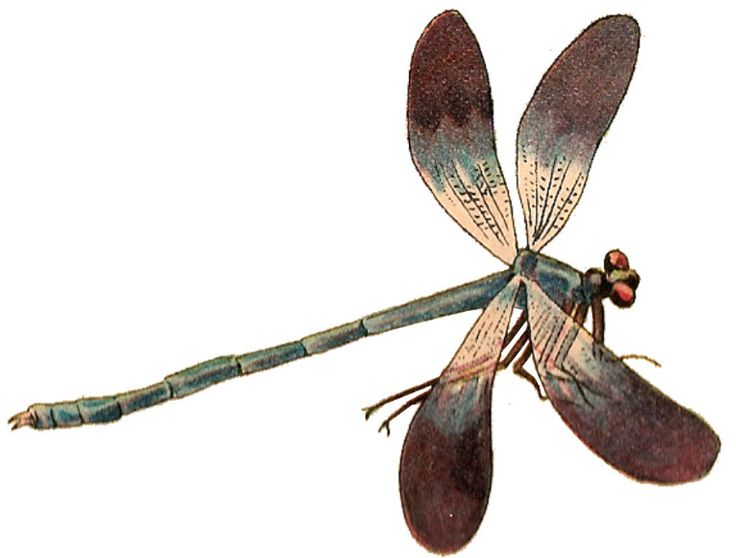 Dragonfly.png (768×583) - Dragonfly, Transparent background PNG HD thumbnail