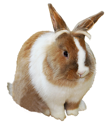 Easter Hare With Umbrella Png Hdpng.com  - Rabbit, Transparent background PNG HD thumbnail