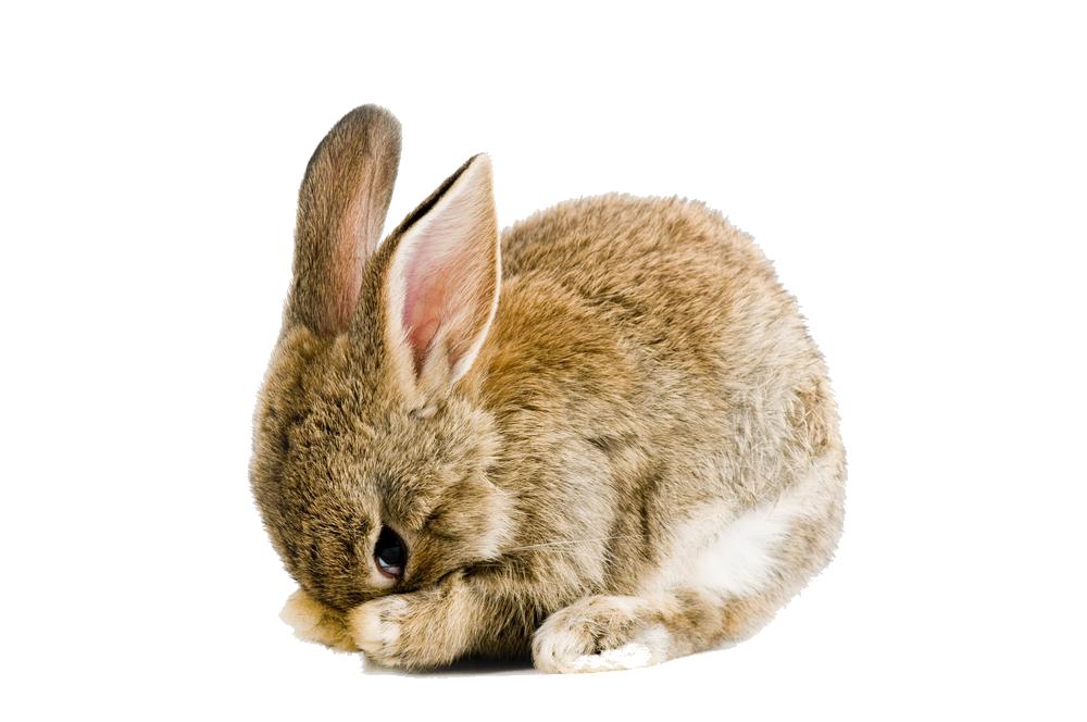 Easter Rabbit Png Pic - Rabbit, Transparent background PNG HD thumbnail