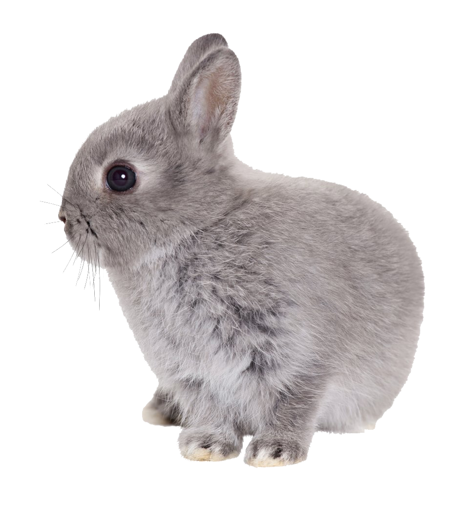 Easter Rabbit Transparent Png - Rabbit, Transparent background PNG HD thumbnail