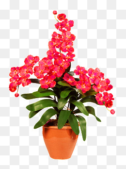 Flower Pot Png - Flower Pot, Flower Pot, Potted, Red Flowers Png Image, Transparent background PNG HD thumbnail