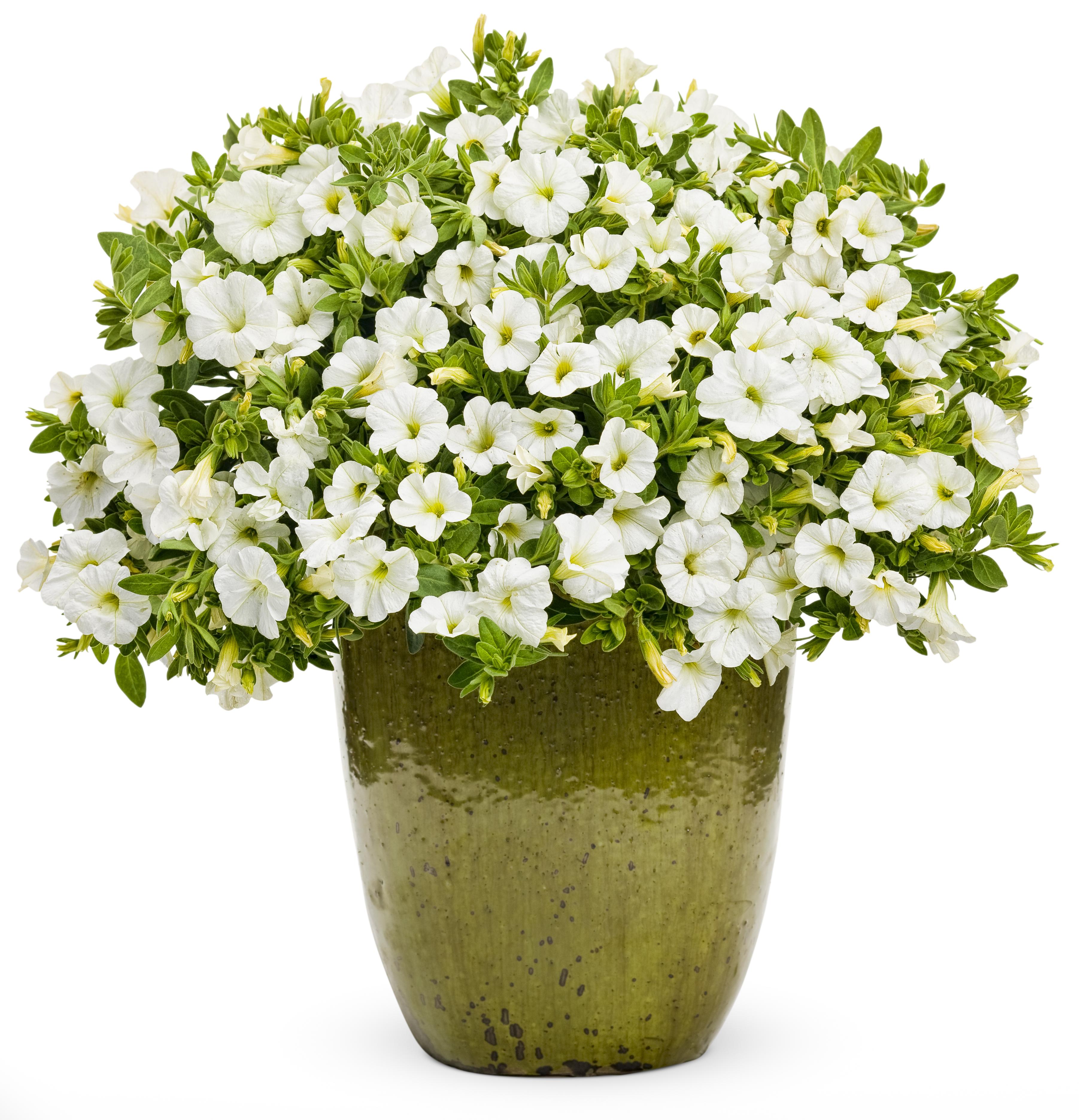 Flower Pot Png - Flower Pots With Flowers Png Flower Pot Pla, Transparent background PNG HD thumbnail