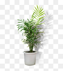 Flower Pot Png - Potted, Potted, Flower Pot, Greenery Png Image, Transparent background PNG HD thumbnail