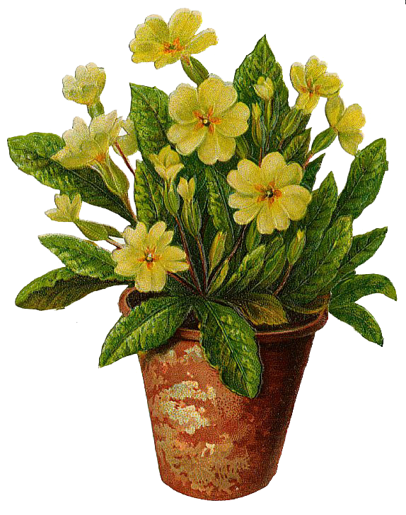 Flower Pot Png - Primroses In A Flower Pot Free Png Image, Transparent background PNG HD thumbnail