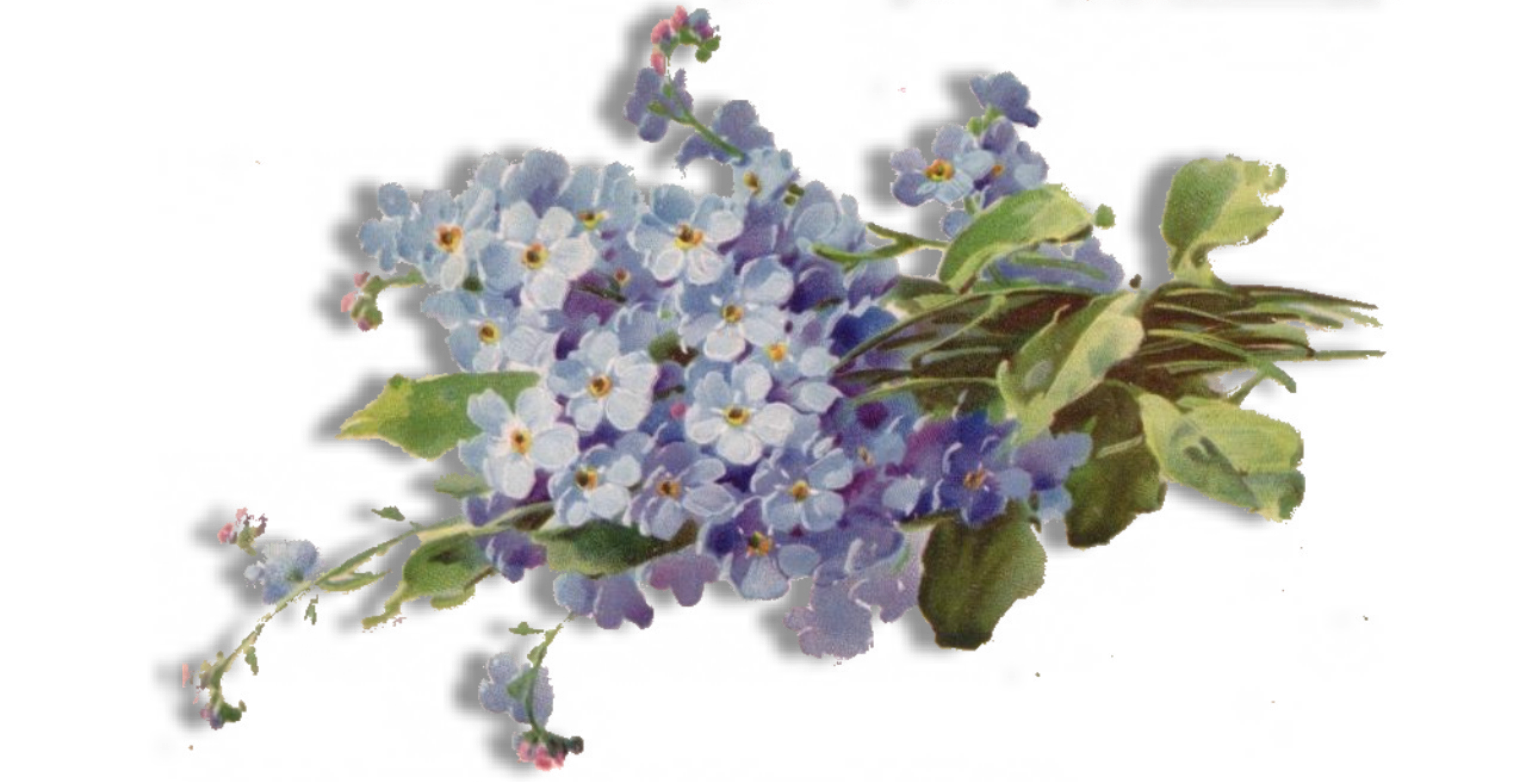 Forget Me Not PNG HD