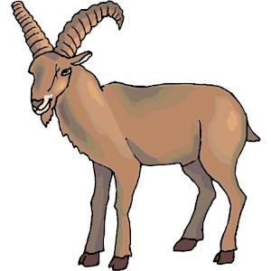Goat - Goat, Transparent background PNG HD thumbnail