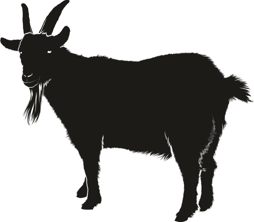 Goat, Black, Animal, Silhouette, Shadow - Goat, Transparent background PNG HD thumbnail