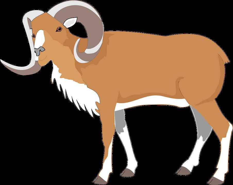 Ram, Goat, Brown, Large, Big, Animal, Horns - Goat, Transparent background PNG HD thumbnail