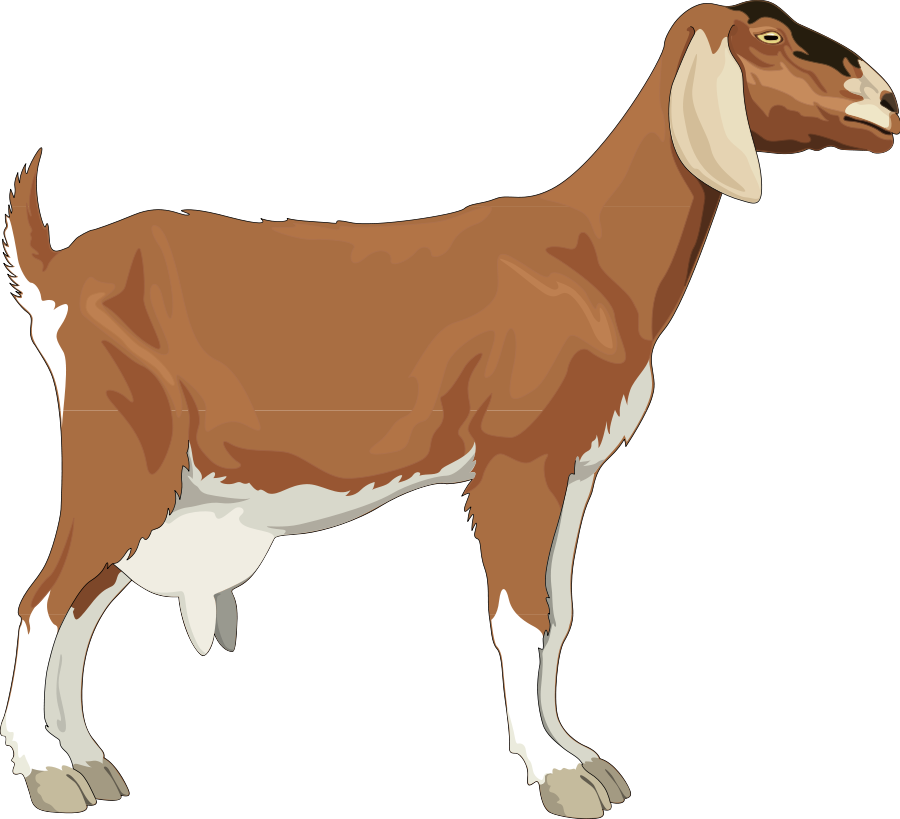 This Free Clip Arts Design Of Goat Png Hdpng.com  - Goat, Transparent background PNG HD thumbnail
