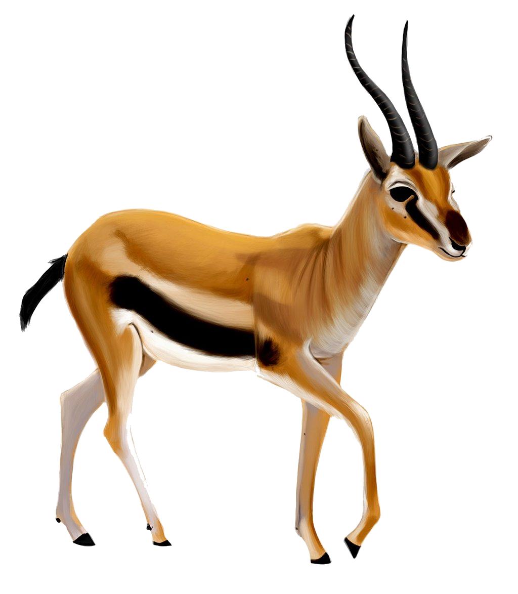 Gazelle PNG