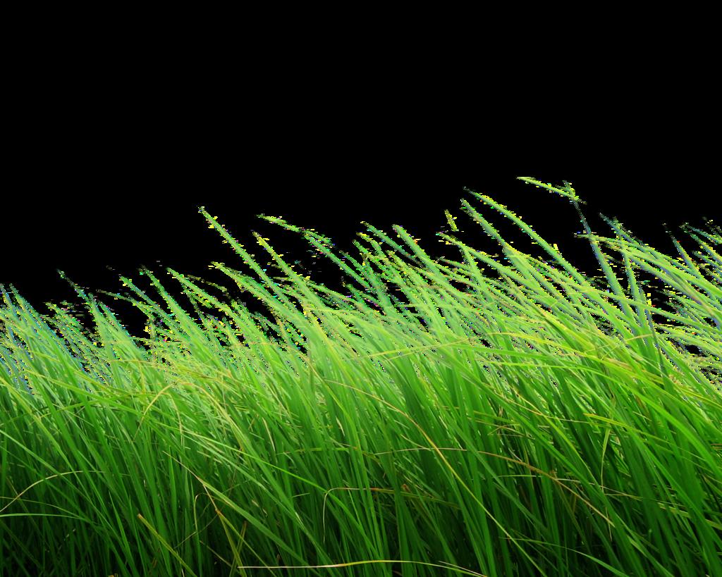 grass png image, green grass