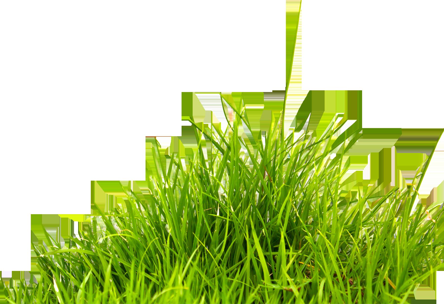 Grass PNG - Grass Image, Green