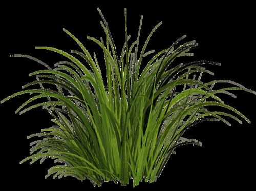 Tall Grass Texture Png Image #4760 - Grass, Transparent background PNG HD thumbnail