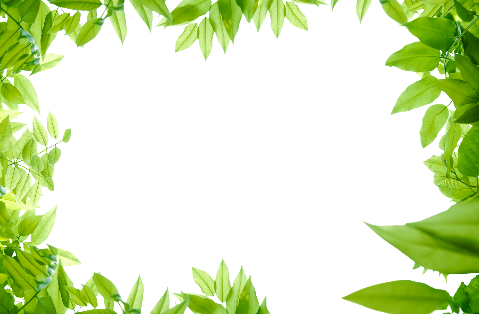 Green Leaves Png Photos - Leaves, Transparent background PNG HD thumbnail