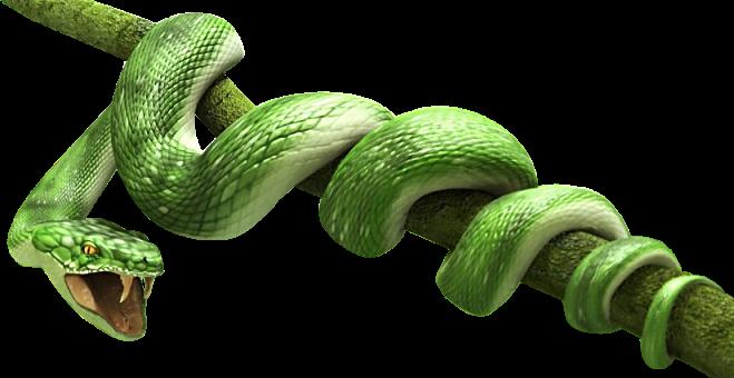 Green Snake Png Image #3640 - Snake, Transparent background PNG HD thumbnail