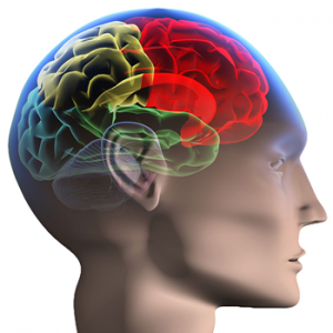 Causes Of Brain Injury - Head Injury, Transparent background PNG HD thumbnail