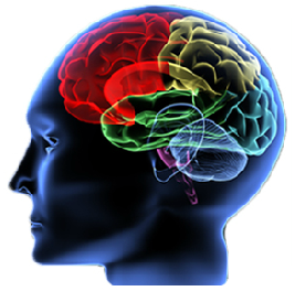 Traumatic Brain Injuries, Which Include Diagnoses Such As Closed Head Injury, Subdural Hematomas, Diffuse Axonal Injuries, And Cerebral Contusion Can Result Hdpng.com  - Head Injury, Transparent background PNG HD thumbnail