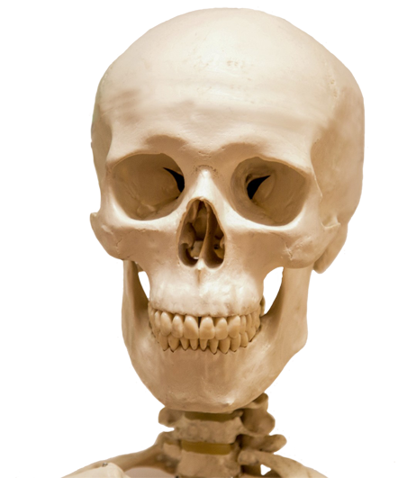 . Hdpng.com Head Skull And Part Skeleton - Skeleton Head, Transparent background PNG HD thumbnail