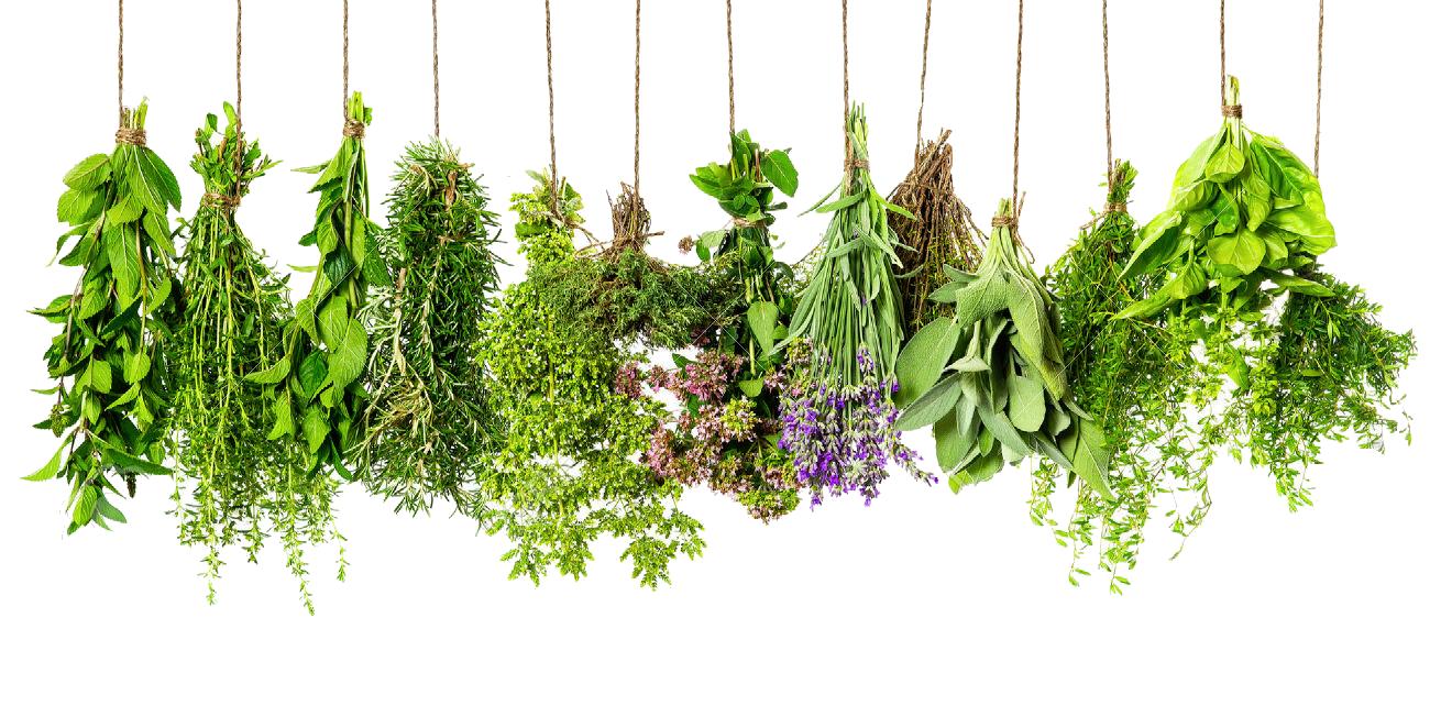 Herbs HD PNG